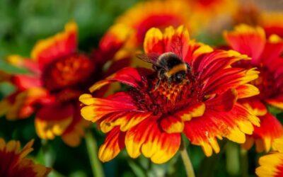 Miel de flores silvestres: Beneficios para la salud